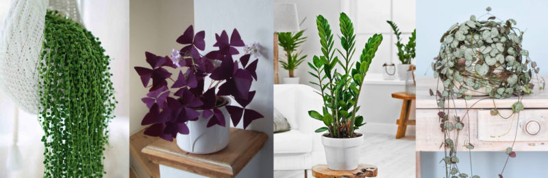5 plantes d'intérieur tendance à adopter d'urgence dans nos intérieur pour les embellir et décorer son home sweet home
