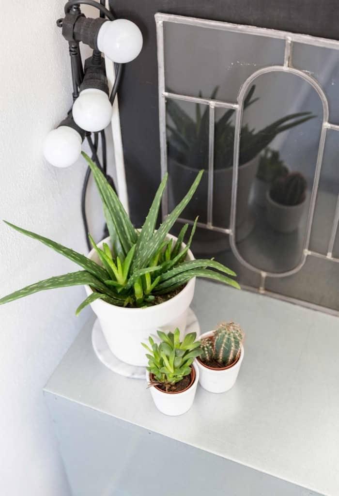 6-groen-vetplanten-cactus