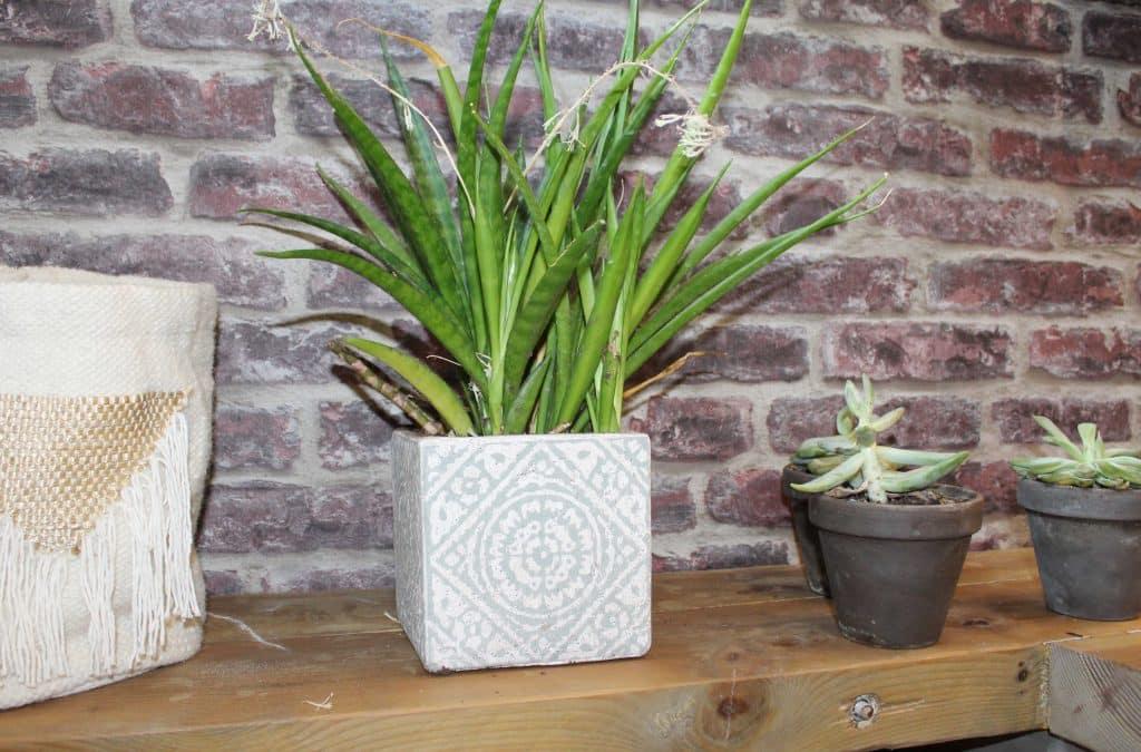 Rénovation de la salle de bain, des plantes vertes pour agrémenter