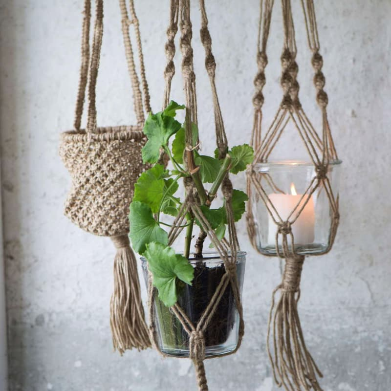 plante en suspension exterieur pinterest le catalogue d