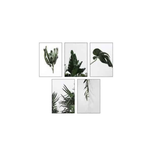 Set de 5 cartes - URBAN JUNGLE - HEMOON - Maison & Décoration