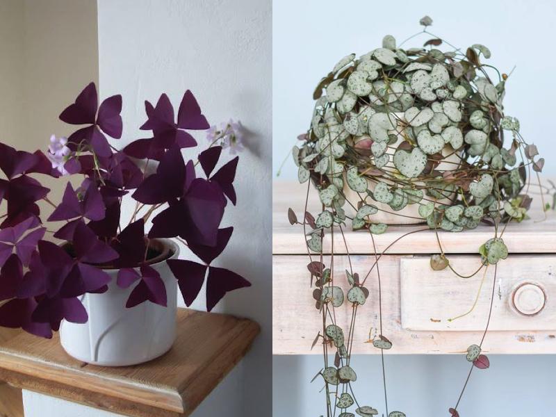 5 plantes d'intérieur tendance à chouchouter cet hiver !