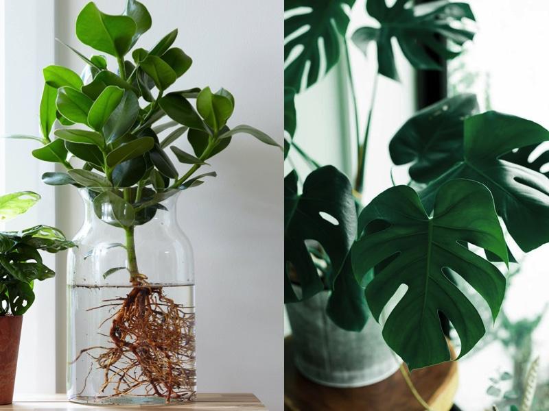 Les plantes d'intérieur tendance : Sélection du printemps